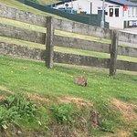 Plenty bunnies on the site 🐰