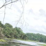 Foto de Panama Rainforest Discovery Center