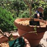 Gardens // The Met Cloisters