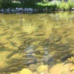 Story Fish Hatchery & Visitor Center