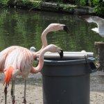 At the flamingos pond