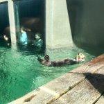 Foto de Seattle Aquarium