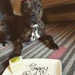 Rocky's Birthday Cake