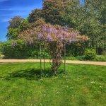 every tree is beautiful