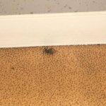 Araignée quand on faisait le lit supérieur