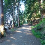 Photo de Willingdon Beach Campsite