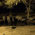 Foto de Senyati Safari Camp
