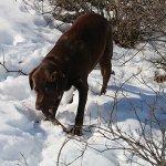 Benson with stick