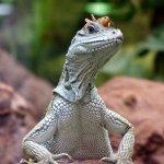 Photo de Antwerp Zoo (Dierentuin)
