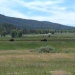 Antelope Flats Foto