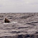 Juvenile sperm whale