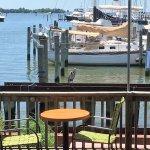 Wildlife and marina view
