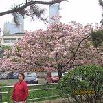 cherry blossom alone the lake