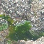 Haystack Rock Foto
