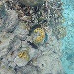 Beautiful corals !