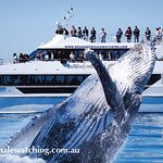 Brisbane Whale Watching invites you to come on board the magnificent Eye-Spy!