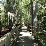 Boardwalk at Manatee Springs State Park, Chiefland Florida