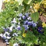 pier 41 flowers3