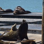 Sea lions at the end of Pier 39
