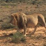 Shamwari Game Reserve Foto