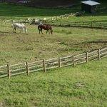 Blick auf die Pferde