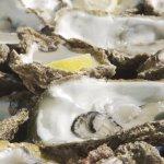 Degustación de ostras y mejillones acompañados de vino o cava