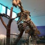 Photo of Museum of Natural Science (Museo de Ciencias Naturales)