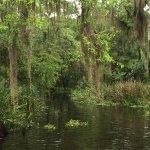 Bayou Boat Ride
