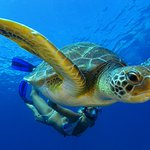 Green turtle @ tenerife
