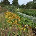 Foto de National Botanic Gardens