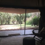 Love in Mara; view from the tent; zebras in Mara; and view from the tent.
