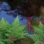 Japanese Garden in Clingendael Park