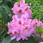 Ketchikan flowers in Spring