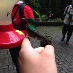hummingbirds - just amazing