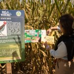 Corn Maze | Fifer Orchards