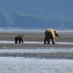 Photo of Alaska Bear Adventures