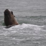 Sea lion on the Whale watching tour
