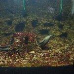 Photo of Aquarium of Constanta