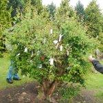 Fairy tree/bush