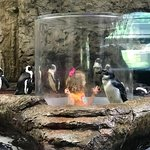 Getting close up with the pengiuns at the Penguin Playhouse.