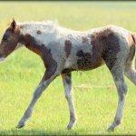 a wonderful waterside newborn horse experience, thanks Captain Gene!
