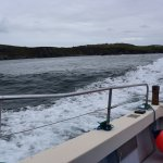 Photo of Casey's Skellig Islands Tours