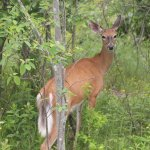 Spotted on our walk on the Downeast sunrise trail. Across the street from the Hotel.