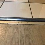 Invasion de fourmis. Il y en a aussi dans les chambres. La réception a l'air de trouver ça norma