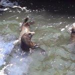 patagonian seals