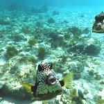 Corales Punta Rusia Foto