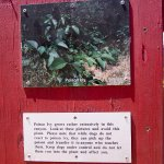 Poison Ivy Warning