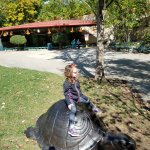 Big turtle at Children's zoo