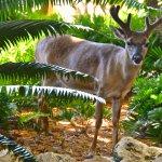 Love the Key Deer!
