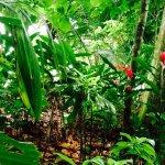 Cahuita National Park Foto